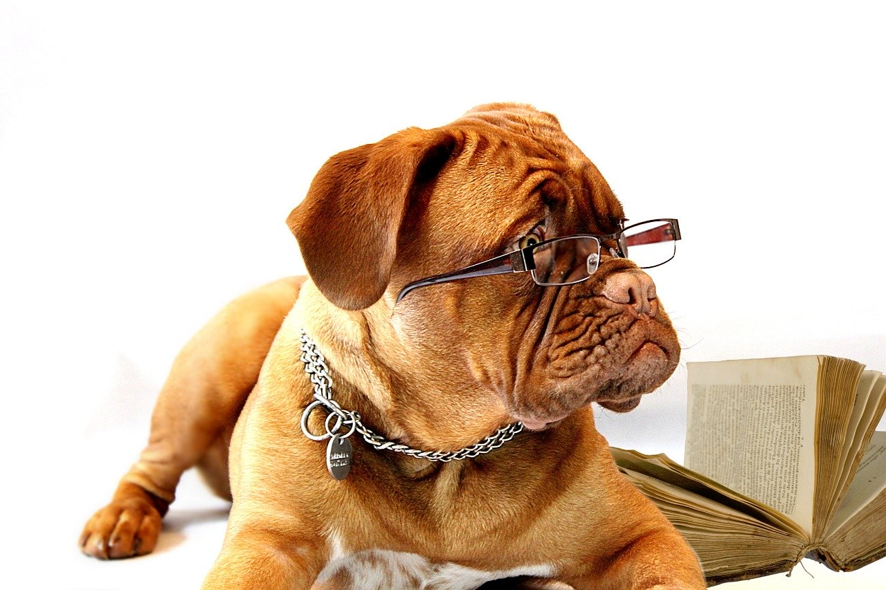 Boxer Hund Brille